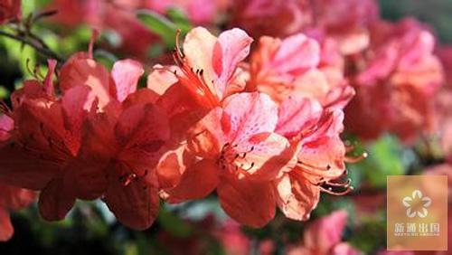 相约三生三世,相伴十里繁花,这个春天带你去寻找那些花香四溢的国度!
