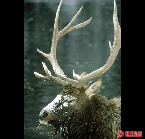 美国,野生动物,动物